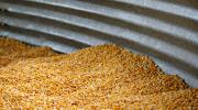 Corn kernels in a metal silo.